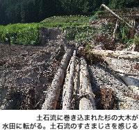 土石流に巻き込まれた杉の大木が水田に転がる。土石流のすさまじさを感じる