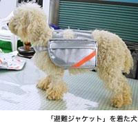 「避難ジャケット」を着た犬