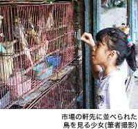 市場の軒先に並べられた鳥を見る少女(筆者撮影)
